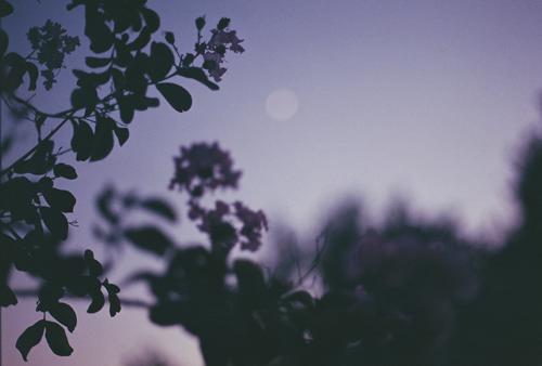 """"""" walks in purple, at dusk film, september 2014 """""""