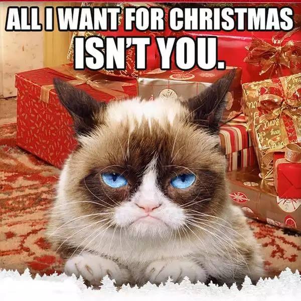 Grumpy Cat Christmas Meme 005 All I Want For Christmas Grumpy Cat Christmas Funny Grumpy Cat Memes Grumpy Cat