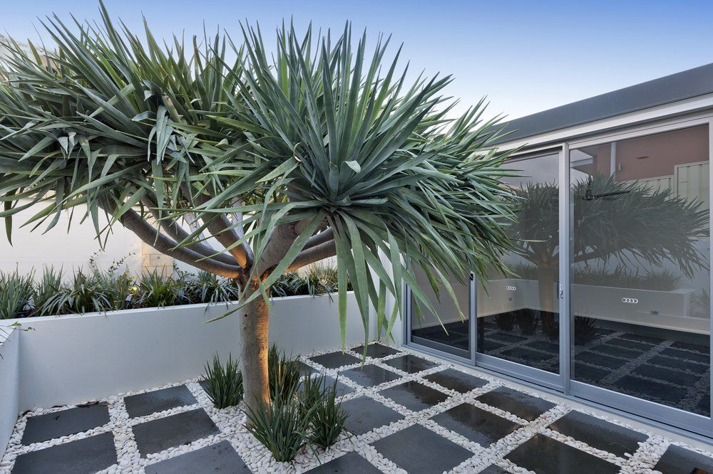 Feature Trees Australia Google Search Landscaping 400 x 300
