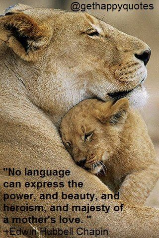 happy, quotes, sayings, cute, mother, love | Animals, Baby ...