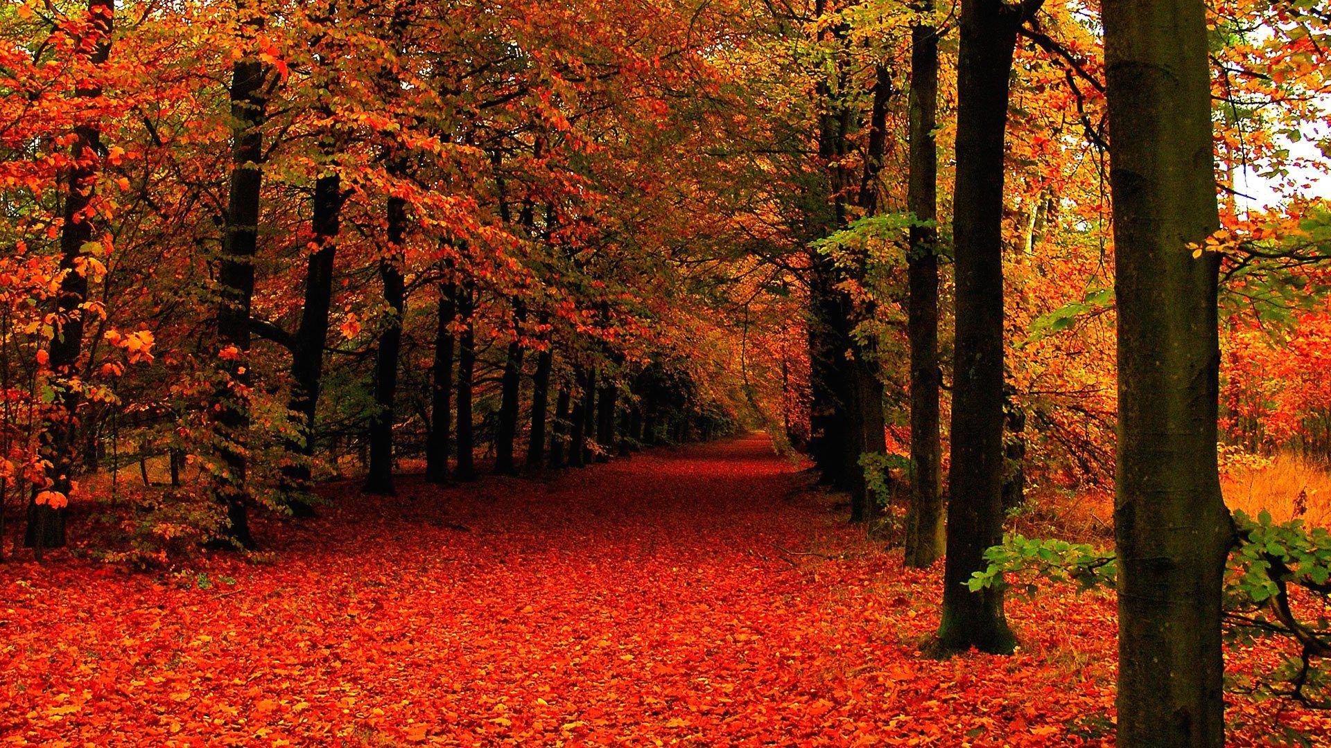 картинки осень для мобильного чаще