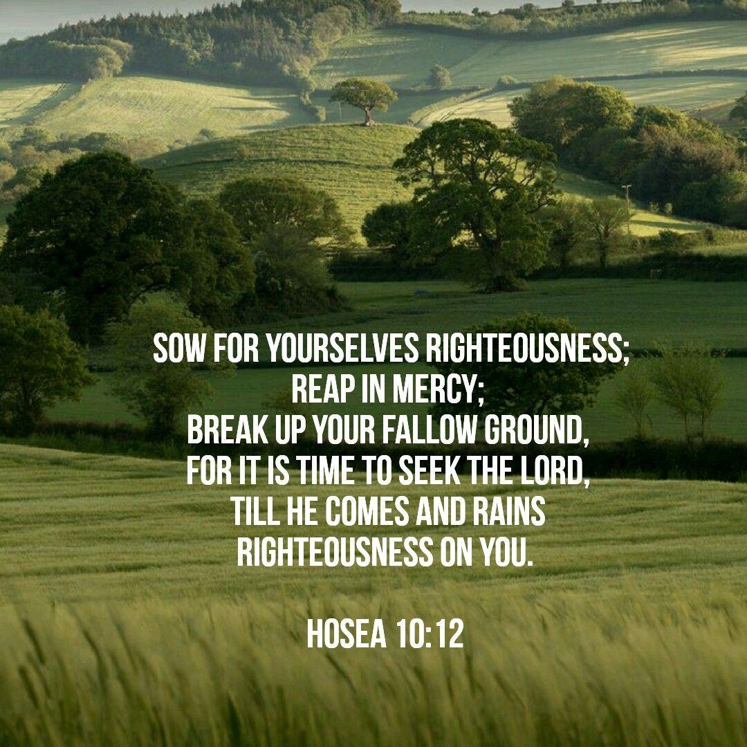 Hosea 10:12 | Hosea 10 12, Seek the lord, Scripture