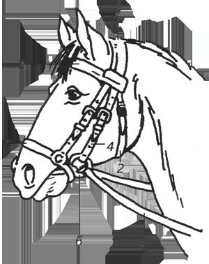 Paard Met Zadel En Hoofdstel Kleurplaat Hoofdstel Fnrs Theorie Paarden