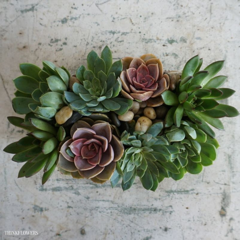 Succulents of Summer ThinkFlowers Blog EyeCandy
