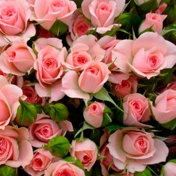 процветок интернет магазин семена и саженцы казахстан