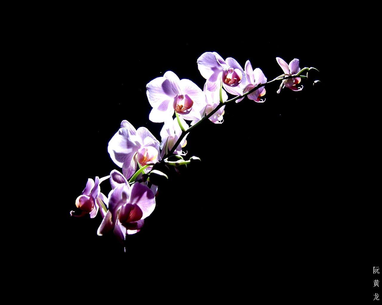 Nice purple orchid flower flowers wallpapers pinterest nice