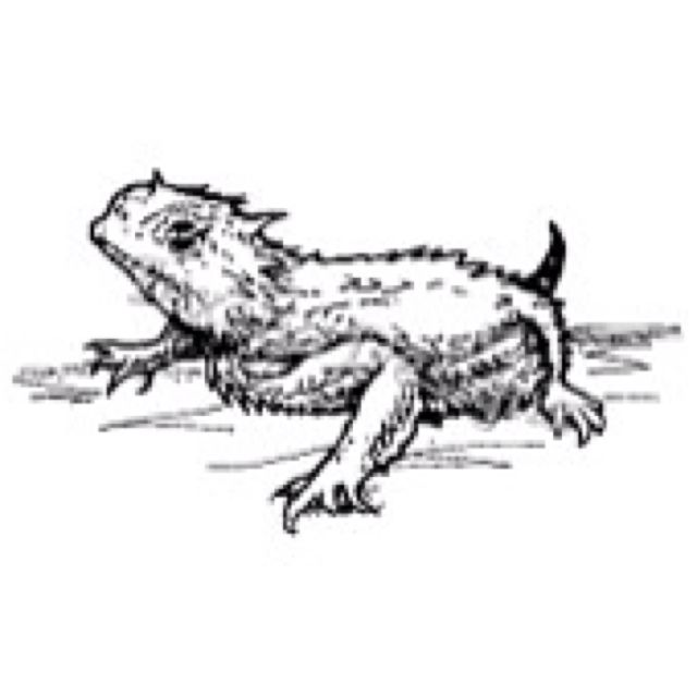 Pin On Horny Toad Horned Lizard