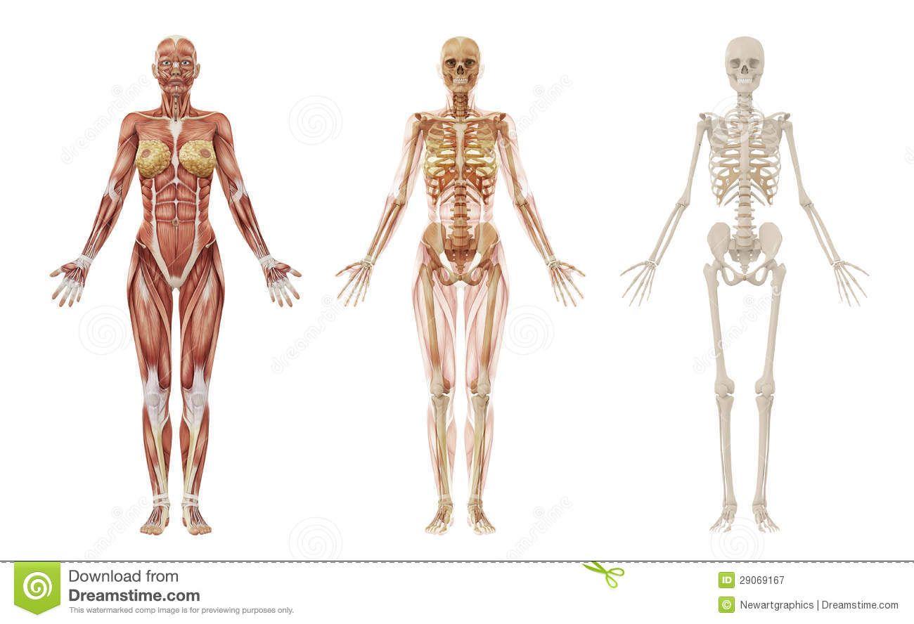 Pin By Pamela Valentine On Anatomy Pinterest Female Skeleton