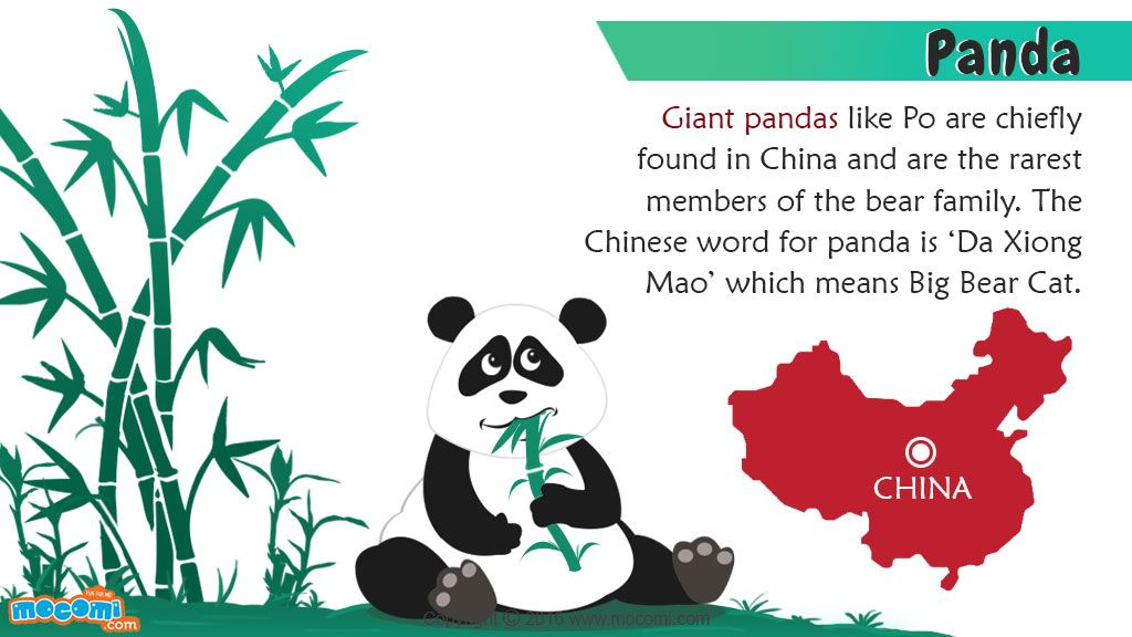 Giant Panda Facts and Information - In China, a giant panda is ...