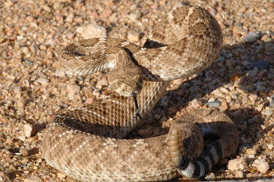 10++ Most dangerous animal in north america images