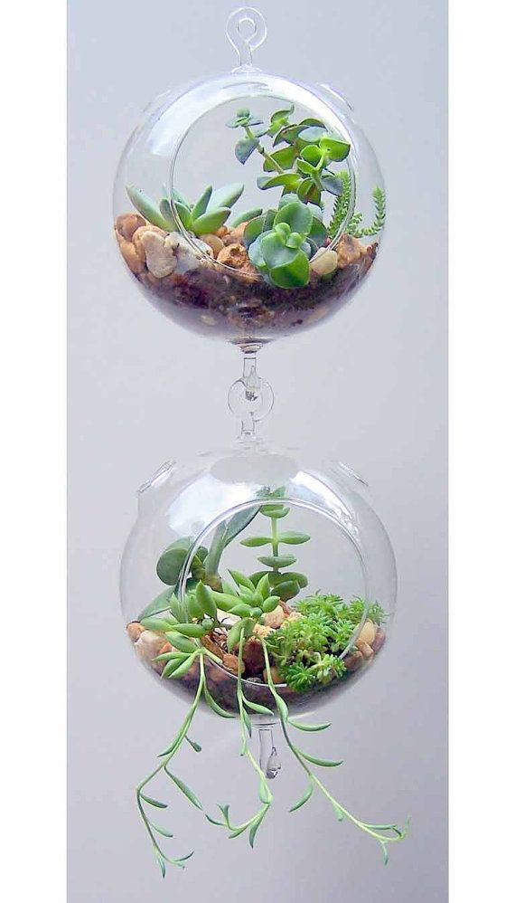 Clear Globe Hanging Terrarium Air Plant Garden With By Partyspin