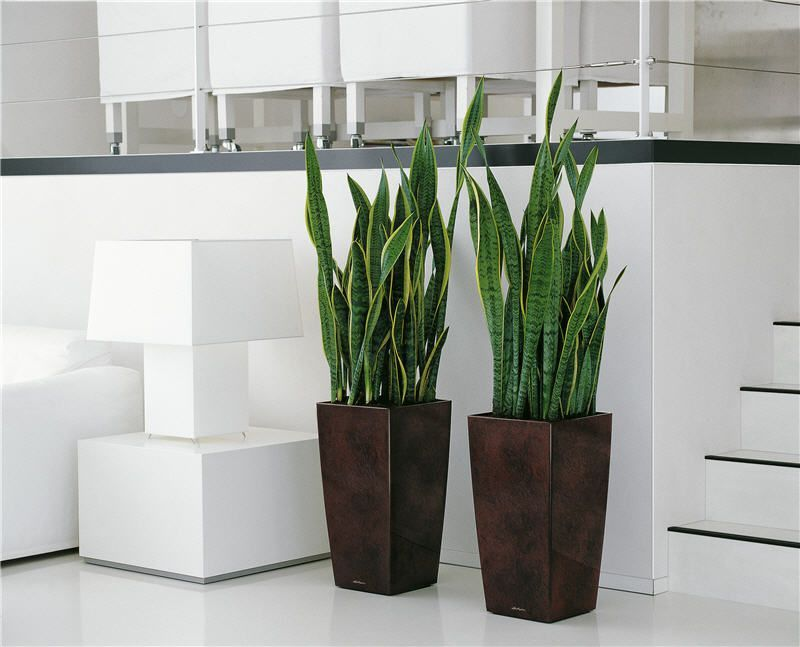 Donica Prosperplast Rato Square Drts400 Mocca Ogrodosfera Pl House Plants Decor Plants Plant Decor