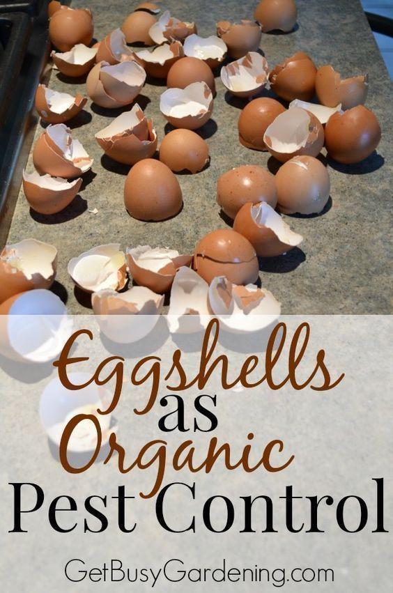 Using Eggshells as Organic Pest Control | Garden pests ...