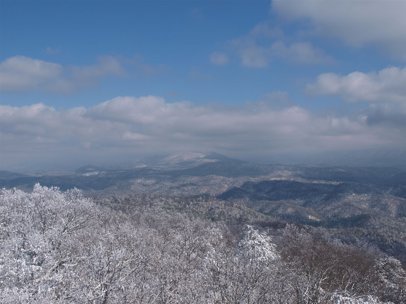 View From Look Rock, Great Smoky Mountains National Park