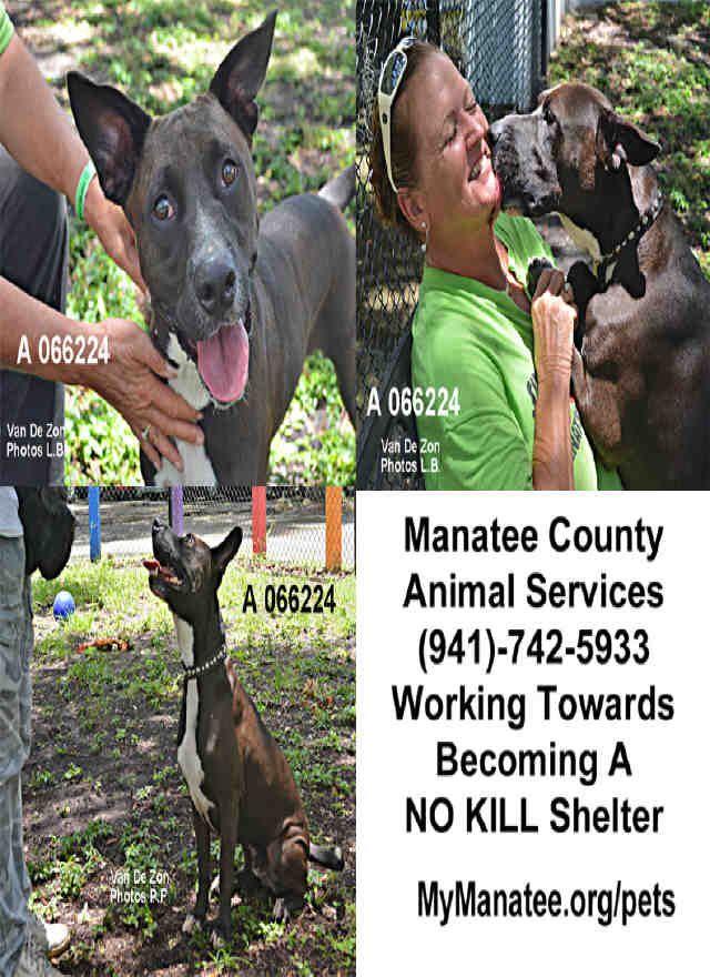Petharbor Com Animal Shelter Adopt A Pet Dogs Cats