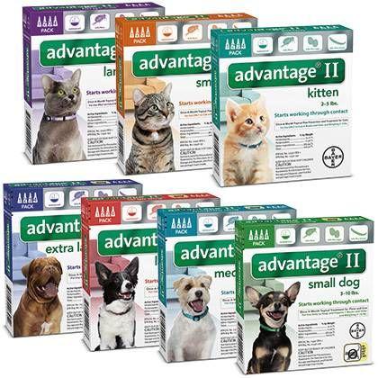 Advantage II Cat has fleas, Flea control for cats, Fleas