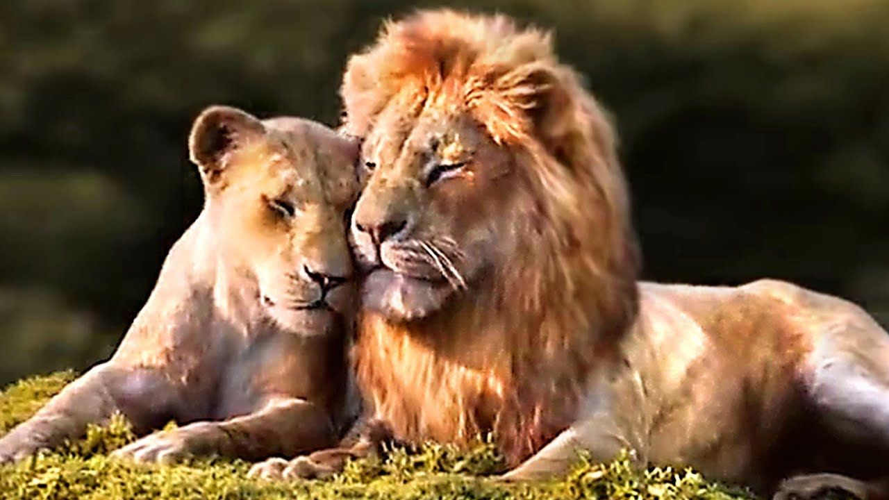 The Lion King Simba Nala Love Scene Trailer 2019 Youtube