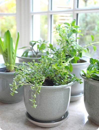 Happiness Is An Indoor Herb Garden Centsational Style Indoor Herb Garden Indoor Vegetable Gardening Herbs Indoors