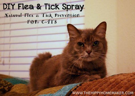 Diy Flea Tick Spray For Cats Thehippyhomemaker Com Flea And Tick Spray Tick Spray Cat Fleas