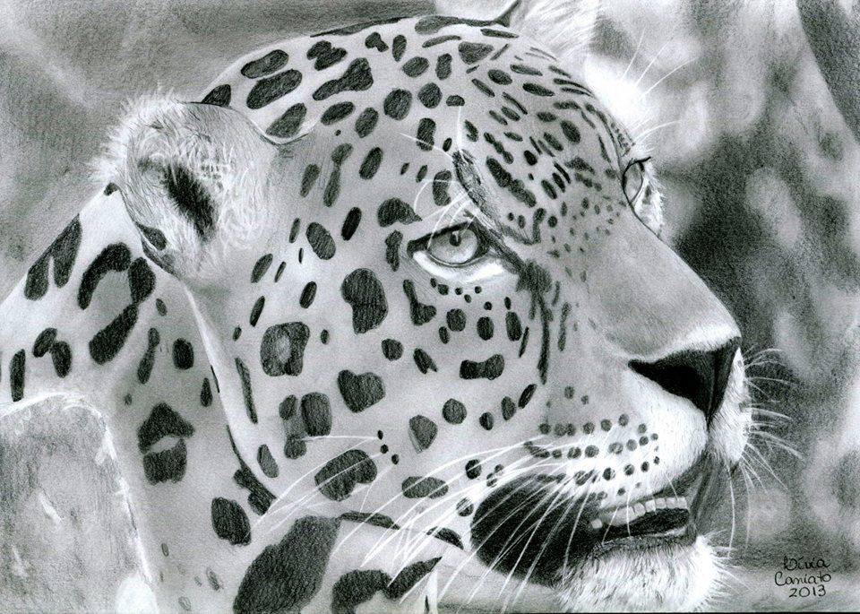 Realistic Jaguar Drawing Grayscale Coloring Realistic Drawings Colorful Pictures