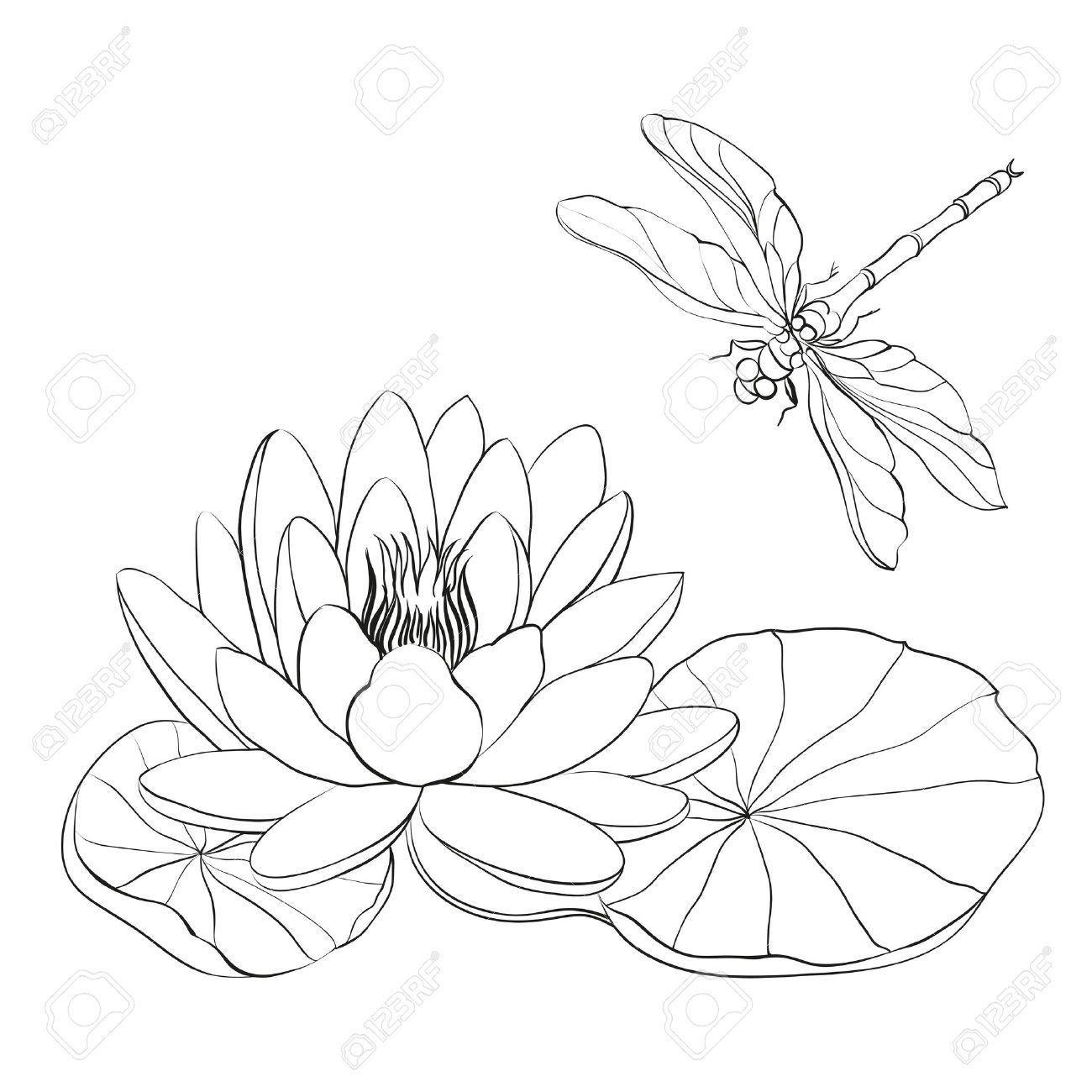 Lily Cliparts Stock Vector And Royalty Free Lily Illustrations Blumenzeichnung Libellen Kunst Libellen Zeichnung