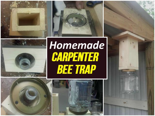 Diy Carpenter Bee Trap