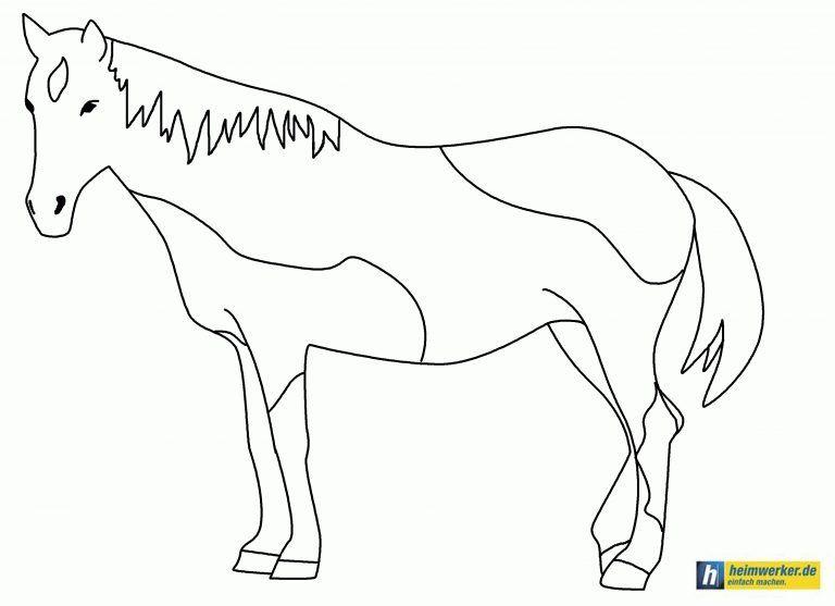 ausmalbilder pferde norweger  malvorlagen norwegische
