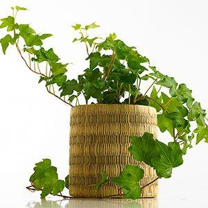 5 plantes pour votre chambre pour vous aider mieux dormir sant et bien tre pinterest. Black Bedroom Furniture Sets. Home Design Ideas