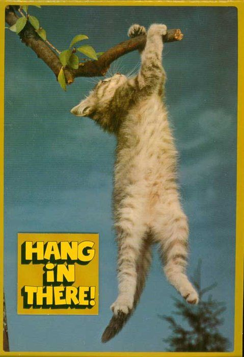 poster of cat hanging from a tree branch with the words Hang in there! underneath