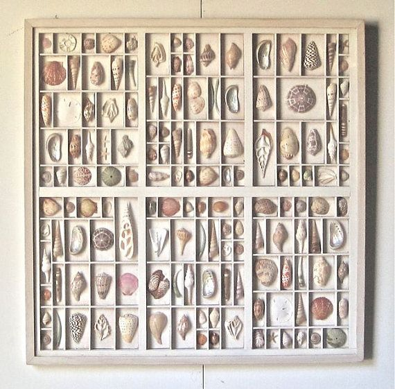 A fun way to display my collection of shells. Painting the printers type drawers white shows off the shells.