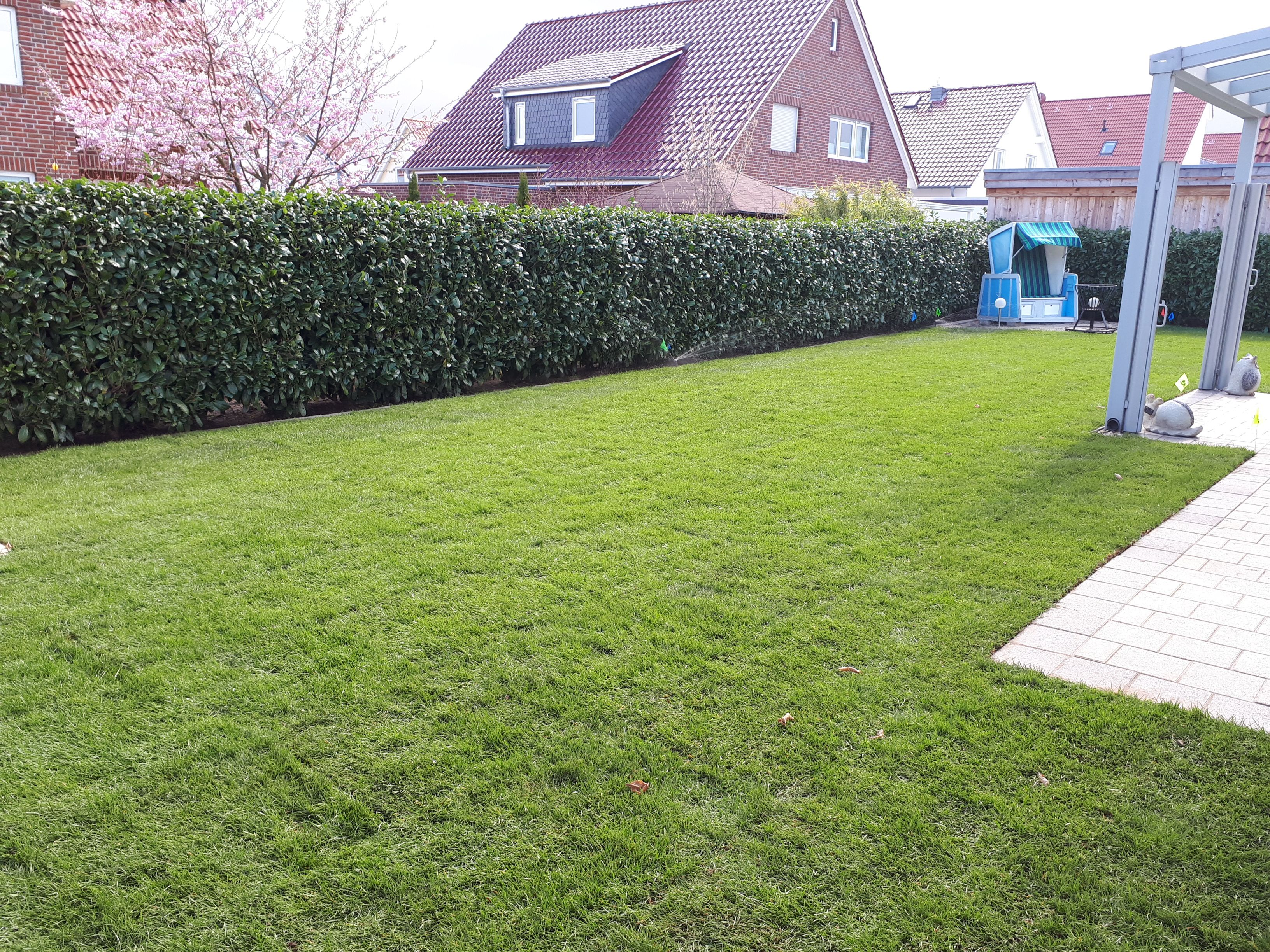 Rollrasen Verlegen In Burgdorf Hannover Burgwedel Und Isernhagen Von Greeenfairway E K Fertigrasen Rollrasen Rasen Garte Gartengestaltung Rasen Draussen