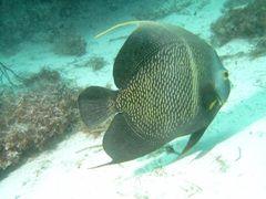 #Principe #diving #Gabon #Africa http://www.steppestravel.co.uk/destinations/africa/gabon%2c+sao+tome+%26+principe/regions/principe/