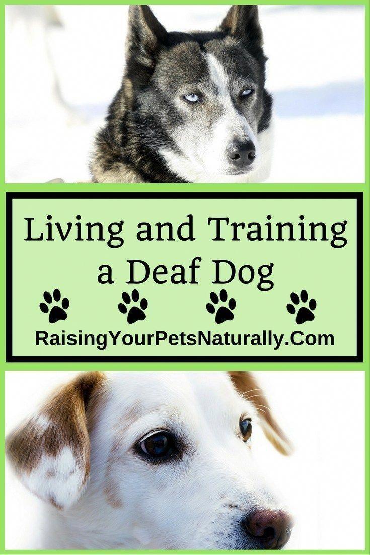 Learn How To Live And Train A Deaf Dog Dogtricktraining Dogcat