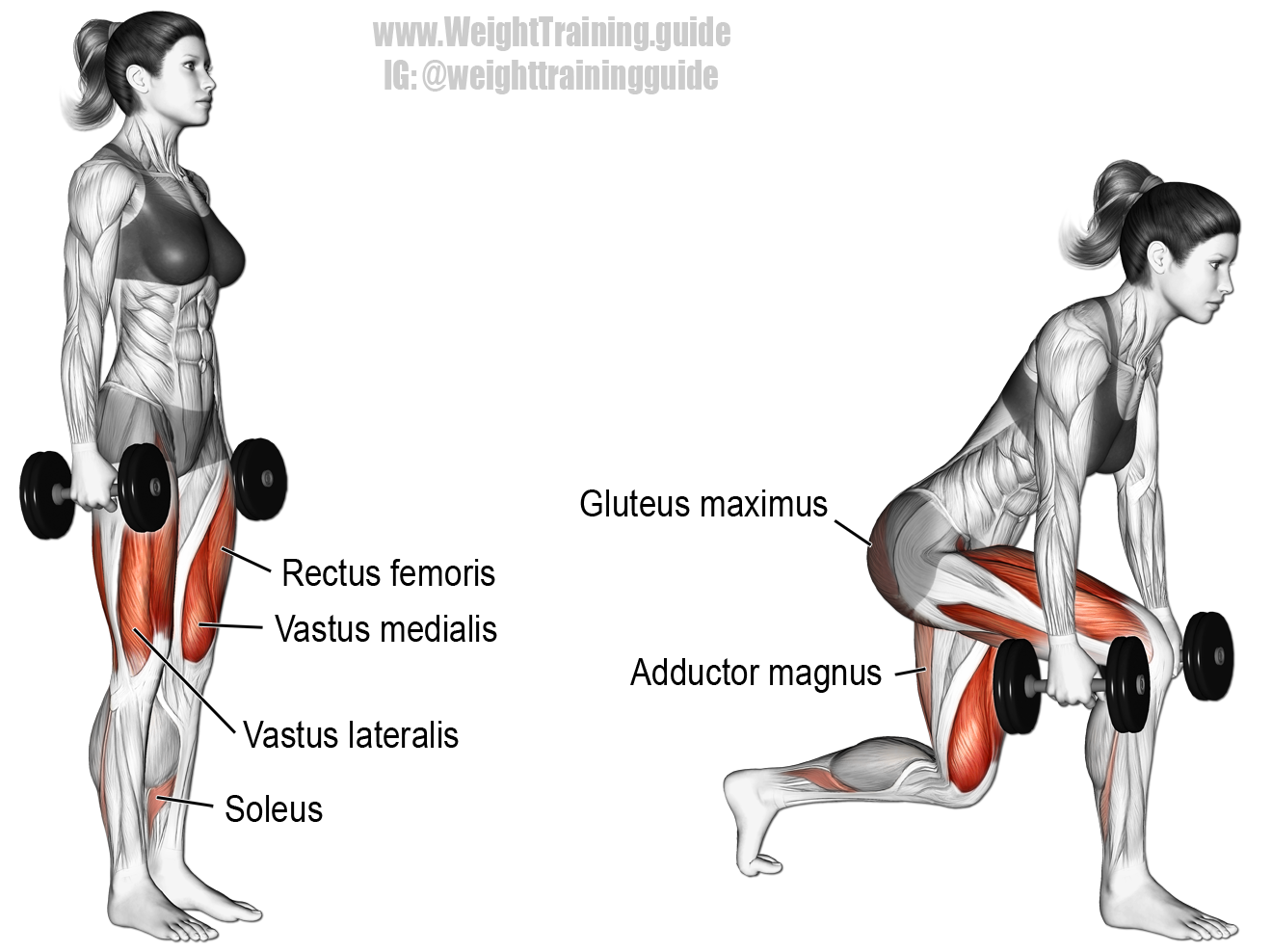 Dumbbell Forward Leaning Lunge A Compound Lower Body