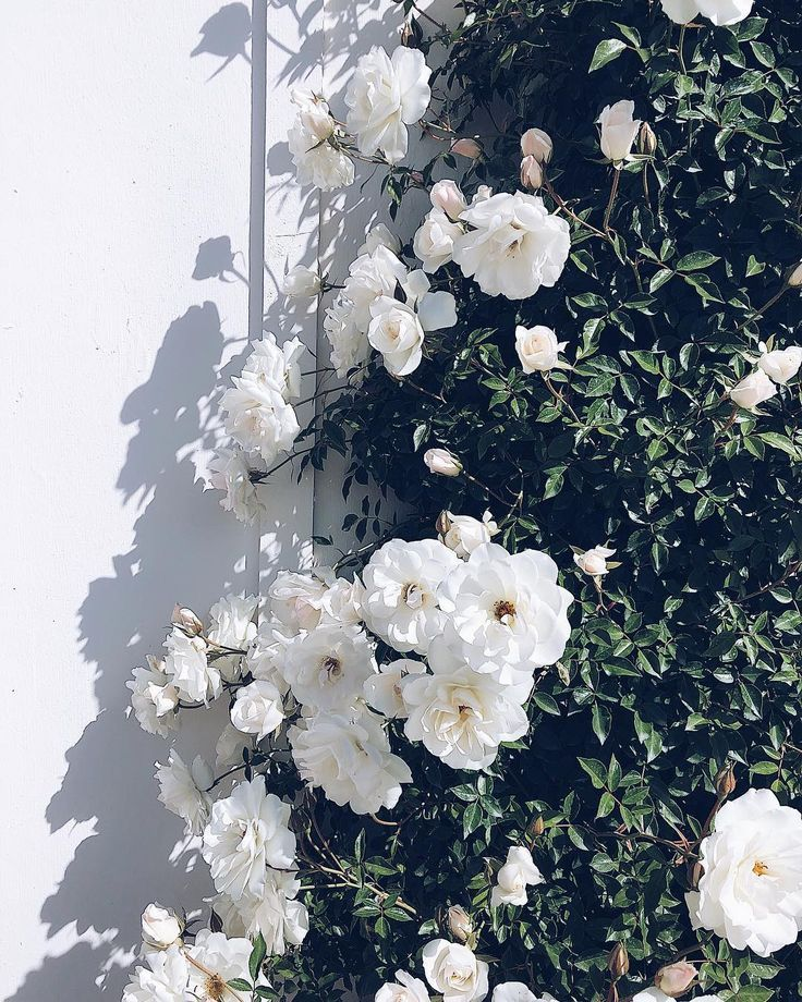Our Top 20 Pins of the Month #floweraesthetic