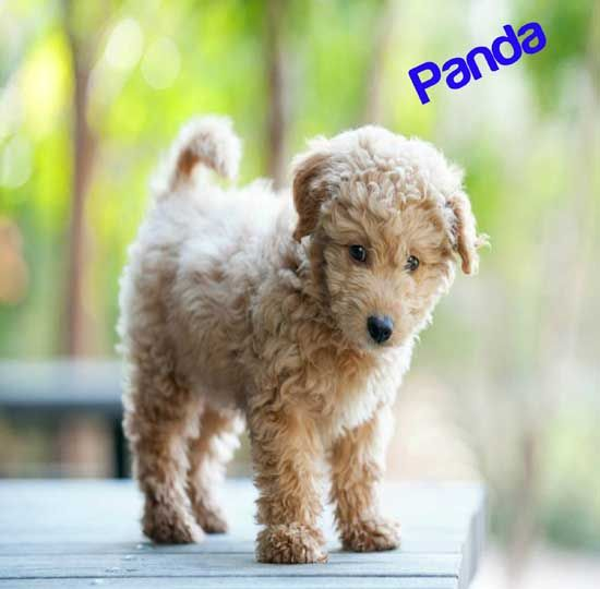 Top 100 Unusual Male Dog Names To Call Your Unique Naughty Pup
