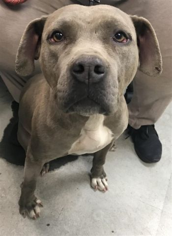 TO BE DESTROYED 11/13/17 11760_AVERY1