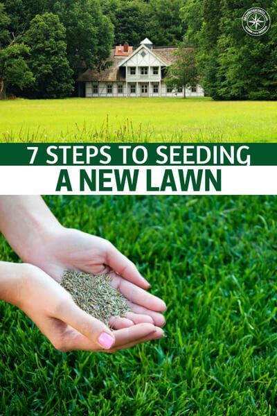 7 Steps To Seeding A New Lawn Shtfpreparedness Planting Grass Seed Planting Grass Seeding Lawn