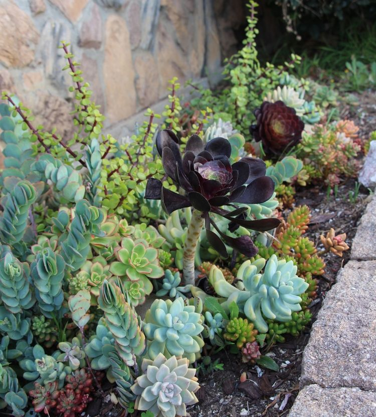 Seaside Succulents A Garden Tour Gardens Search and Pools