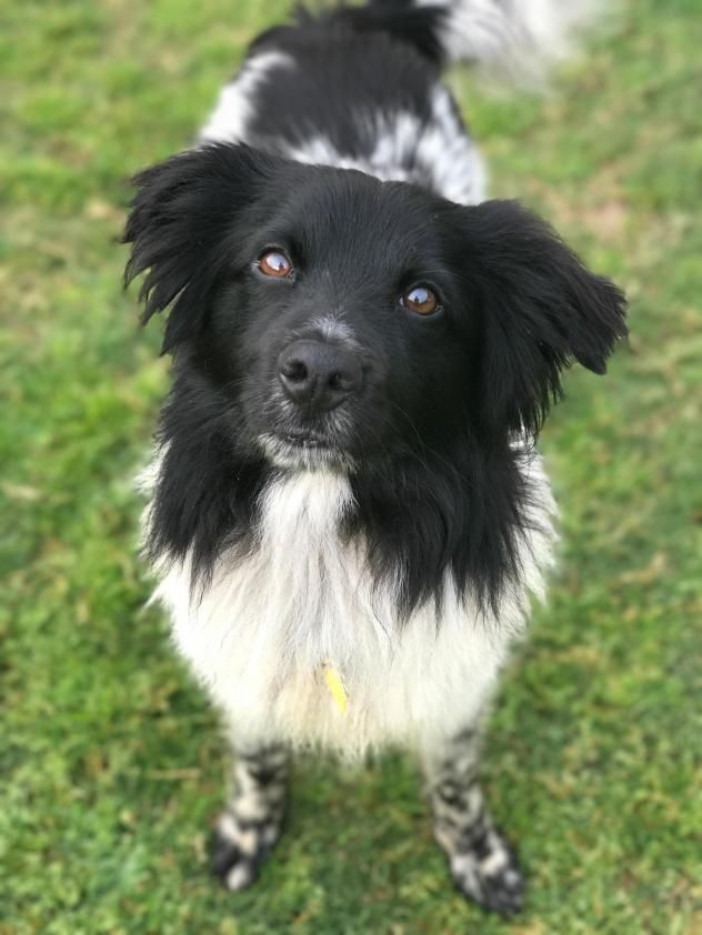Adopt Sterling NY on Dogs, Pets, Shepherd mix dog