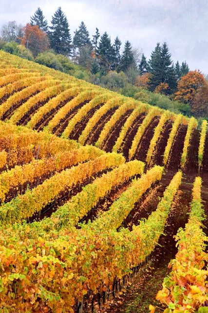 """Vineyard Abstract,"" Newberg, Oregon.  Photo: Rick Lundh"