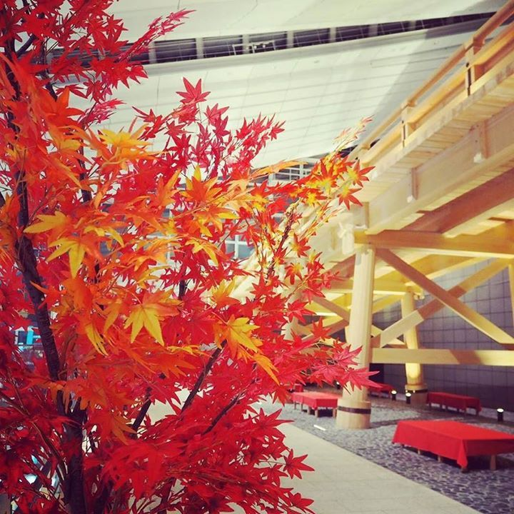 Repost a new photo taken by minagoi! 羽田空港も秋色 #hanedaairport #hanedainternationalairport #autum #fall #autumcolor #airport #tokyo #japan #羽田空港 #秋 #秋色 #日本橋 #하네다공항 #공항 #도쿄 #가을 #instadaily #instatravel#instagramsearch #searchinstagram http://ift.tt/1LObI6c More post like this http://goo.gl/kZKBdC - http://ift.tt/1Myc4xw #hash4tag