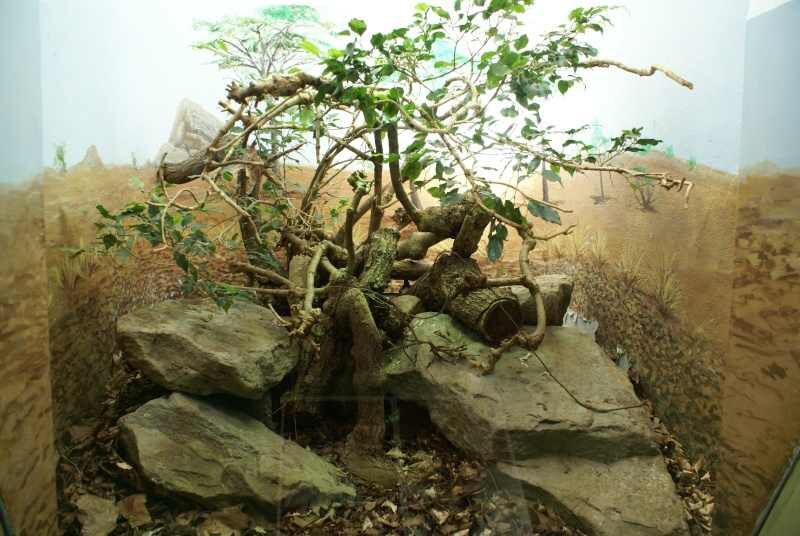 Python regius Biotope