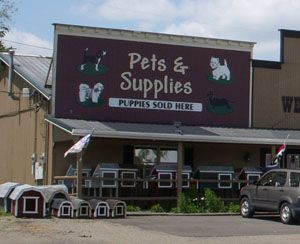Berlin Pets Small Breed Puppies Are At Schrock S Amish Farm And Village Amish Farm Buy Puppies Puppy Mills