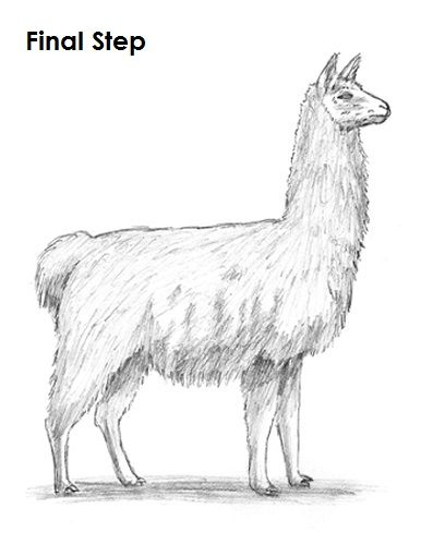 How To Draw A Llama Video Step By Step Pictures Llama Drawing
