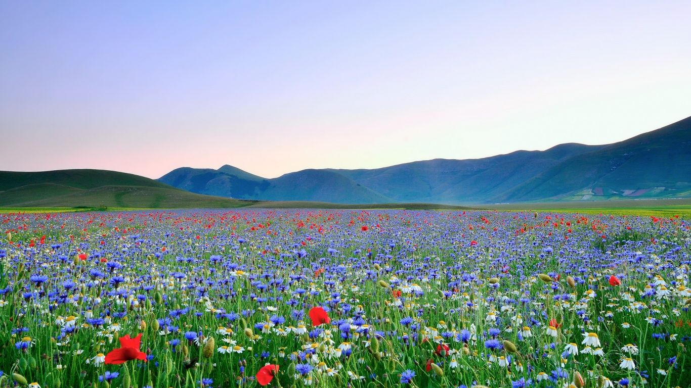 Beautiful field of flowers beautiful field of flowers wallpapers beautiful field of flowers beautiful field of flowers wallpapers in 1366768 resolution 500159 izmirmasajfo