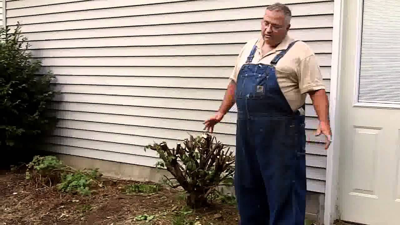 http mikesbackyardnursery com i prove to you that you can cut