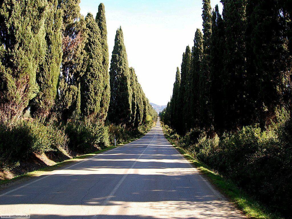 bolgheri www.tuscanysuitsyou.com