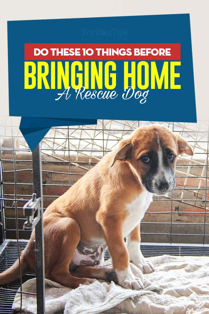 Do These 10 Things Before Bringing Home A Rescue Dog In 2020 Rescue Dogs Training Your Dog Dog Crate
