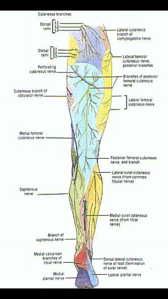 dolor nervioso en la parte posterior de las piernas